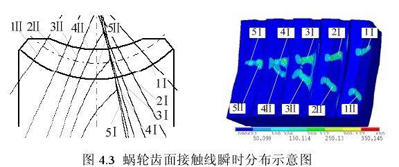 環面蝸桿蝸輪副雙線接觸示意圖.jpg